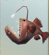 SOD-AnglerFish3.JPG