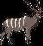 Koodoo the Greater Kudu