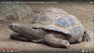 Louisville Zoo Tortoise