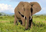 1013320-elephant-tanzania