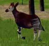 Okapi-wildlife-park-2