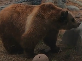 Tulsa Zoo Bear