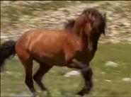 MMHM Horse