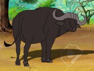 Rileys Adventures African Cape Buffalo