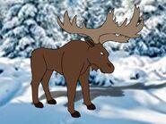 Rileys Adventures Alaskan Moose