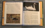 Scholastic Encyclopedia Of Animals (52)