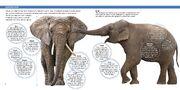 The World of Elephants