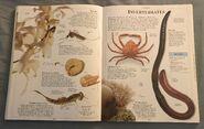 DK Encyclopedia Of Animals (97)
