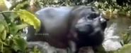 JTNL Hippo