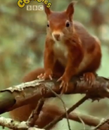 Mama Mirabelle Squirrel