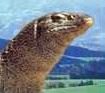 Nile monitor lizard switch zoo