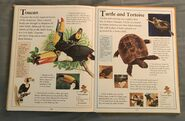 The Kingfisher First Animal Encyclopedia (71)