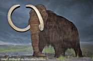 Woolly-mammoths-image