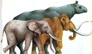 Woolly Mammoths African Elephants and Paraceratherium