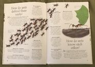 Creepy Crawlies (Over 100 Questions and Answers to Things You Want to Know) (4)