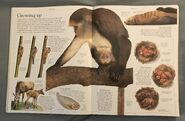 DK Encyclopedia Of Animals (14)