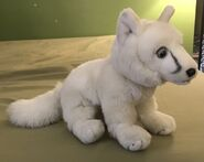 Ursula the Arctic Fox