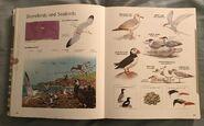 Visual Dictionary of Animals (78)