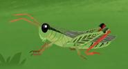 WK Grasshopper