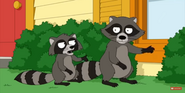 Family Guy Racoons