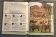 Fantastic World of Animals (68)