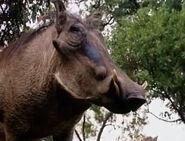 HugoSafari - Warthog