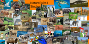 My NatureRules1 Spoof Poster