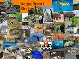 NatureRules1