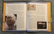 Scholastic Encyclopedia Of Animals (48)