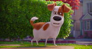 Secret-life-pets-disneyscreencaps.com-7830