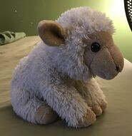 Shane the Sheep
