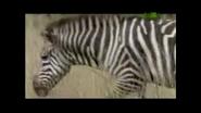UTAUC Zebra 2