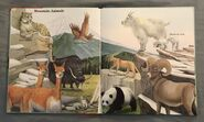 My First Book of Animals from A to Z (15)