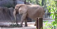 Riverbanks Zoo Elephant