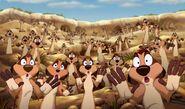 Timon27s meerkat colony