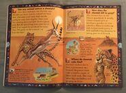 Wild Cats and Other Dangerous Predators (4)