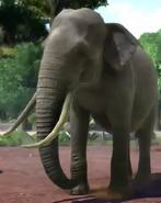 Borneo-elephant-zootycoon3