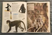 DK Encyclopedia Of Animals (116)