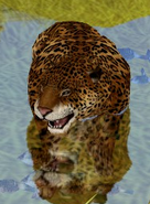 Jaguar-zoo-empire