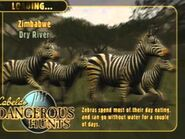 Zebras in Cabela's Dangerous Hunts