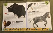 Endangered Animals Dictionary (26)