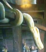 Evan Almighty Pythons