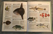 Macmillan Animal Encyclopedia for Children (45)