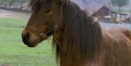 Racing Stripes Pony