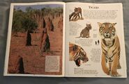 DK Encyclopedia Of Animals (159)