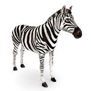 Model Zebra