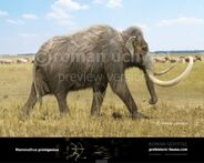 Woolly mammoth2