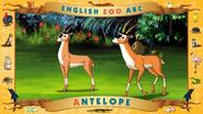 ABC Antelope