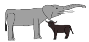 Eugene and Chief Buffalo