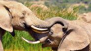 Kids-help-elephants.ngsversion.1490302611576